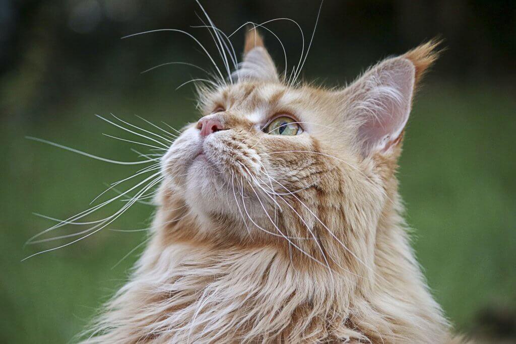 Cat Friendly Cat