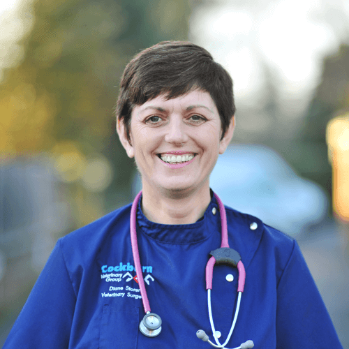 cockburn-veterinary-group-vet-in-coalville-staff-Diane-Storer-2020