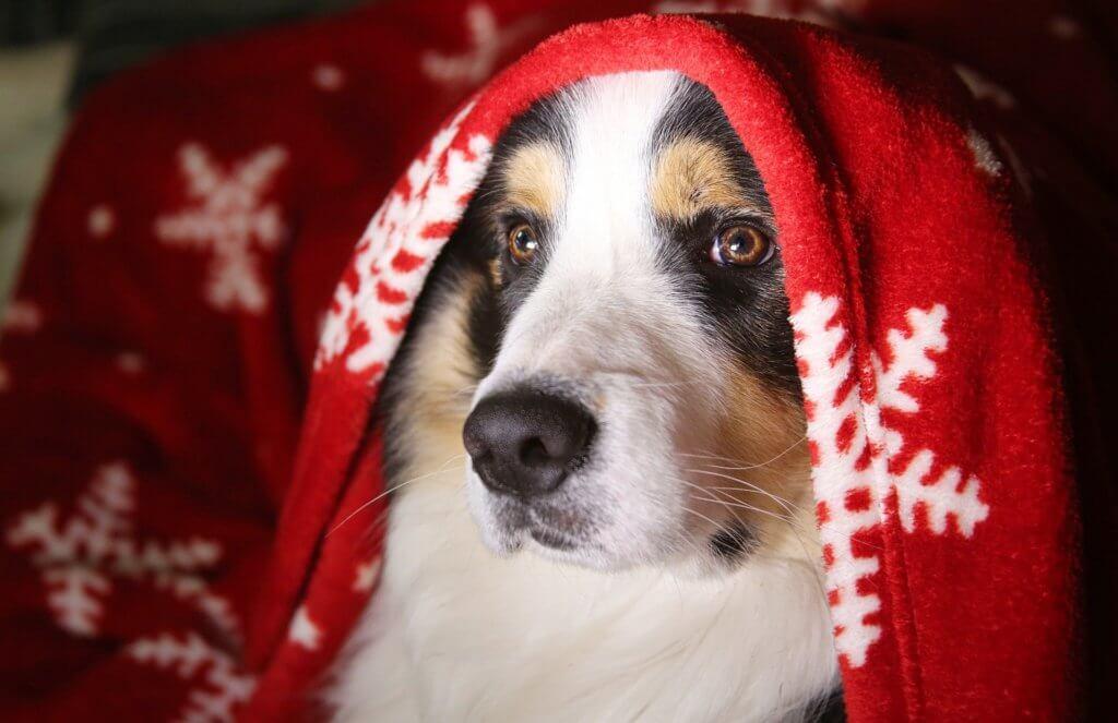 dog - vets ashby north leicestershire xmas blog