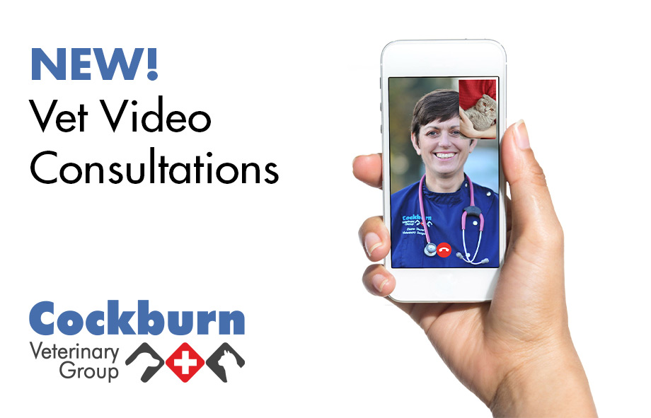 Video Consultation: Vet consultations via mobile phone | Cockburn Vets