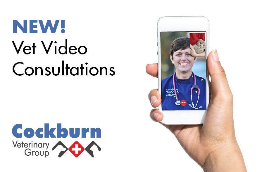 Video Consultation: Vet consultations via mobile phone   Cockburn Vets