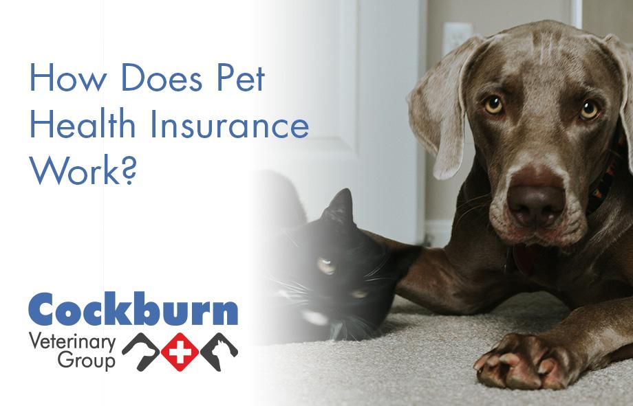 Cockburn Vets - Pet Health Insurance - wp